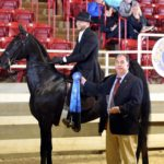 "Andrew Pearman – The ""Superbowl"" of Equine Hopeful"